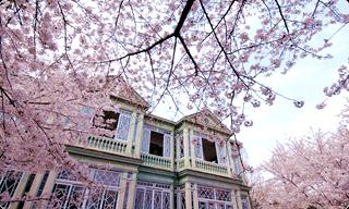 旧ハンター邸(王子動物園内)の桜