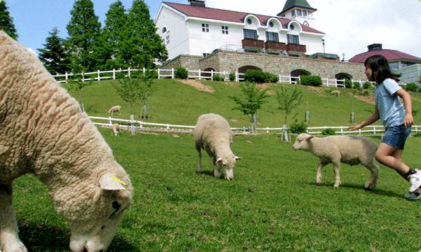 六甲山牧場の風景