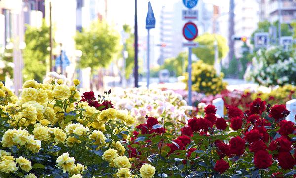 「フラワーロード」の花壇